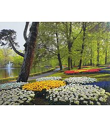 Buy Picture of Keukenhof Garden in Amsterdam