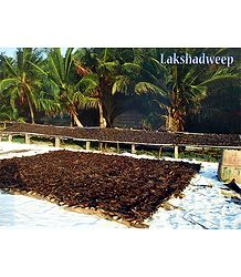 Fish Drying in Lakshadweep, India