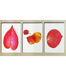 Leaf Poster - Buy Online