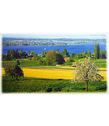 Untersee Lake - Switzerland Poster