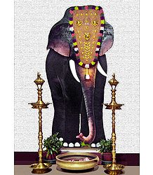 Elephant Poster - Photographic Print