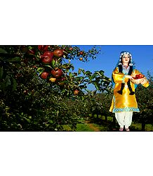 Kashmiri Apple Plucker - Unframed Photo Print on Paper