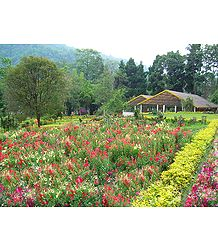 Saramsa Garden, Gangtok - East Sikkim, India