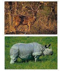 Chital and Rhinoceros - Set of 2 Postcards