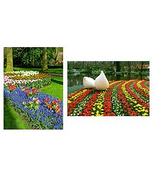 Keukenhof Garden in Netherlands  - Set of 2 Postcards