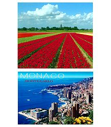 Tulip Field in Holland and Monaco - 2 Postcards