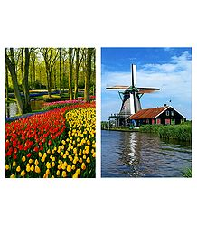 Tulip Garden and Windmilll, Netherlands - 2 Postcards