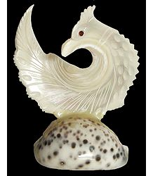 Shell Peacock